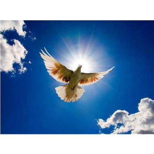 Doves large kabootar sky sun 1