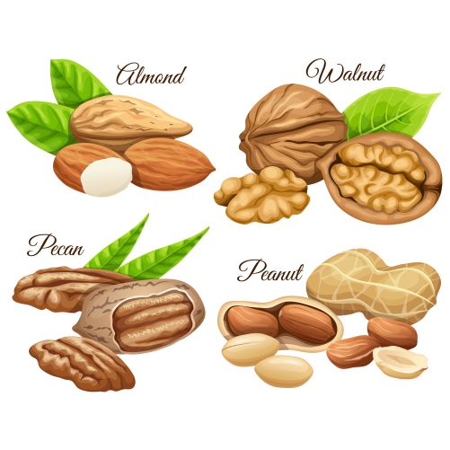 set nuts almond walnut pecan peanut 1