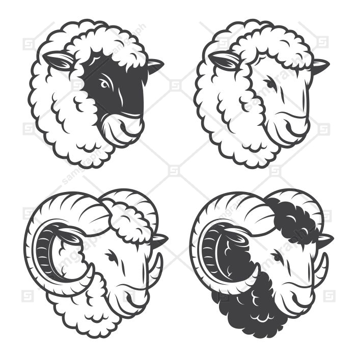 4 sheeps rams heads monochrome isolated white background 1