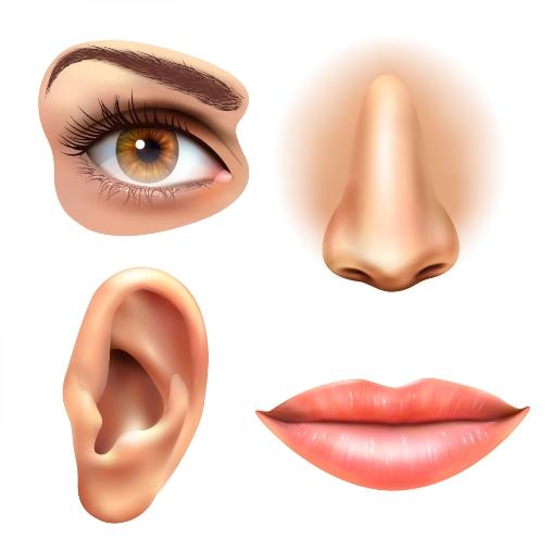 eye ear lips nose icons set 1
