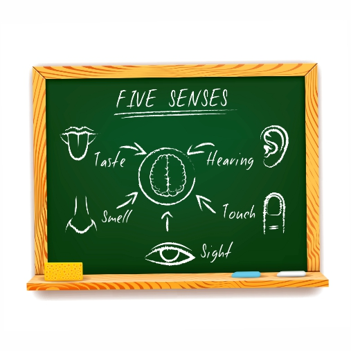 hand drawn infographic chalkboard five senses depicting sight touch smell taste hearing with a 1