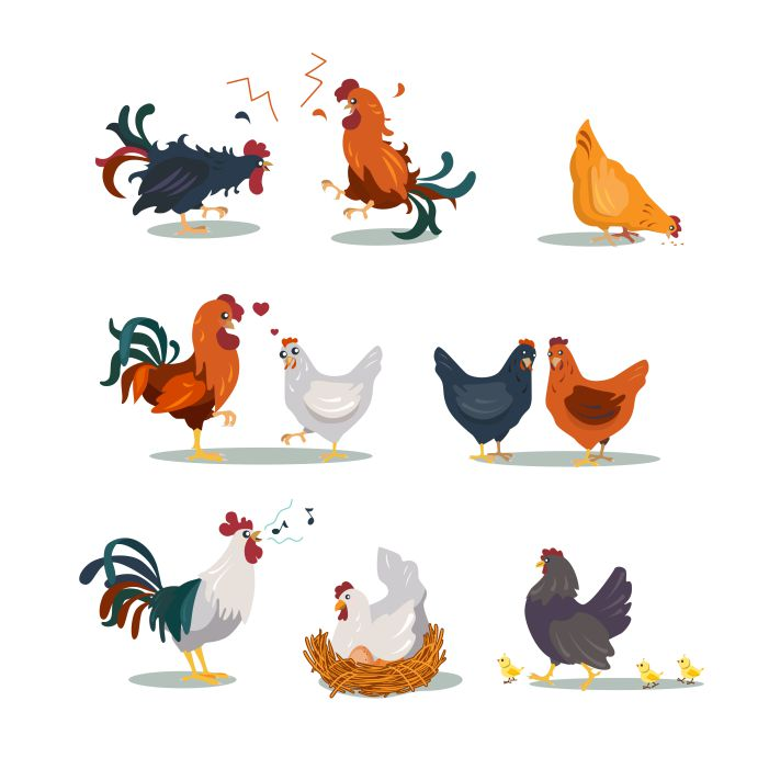 various hens roosters flat icon set 1