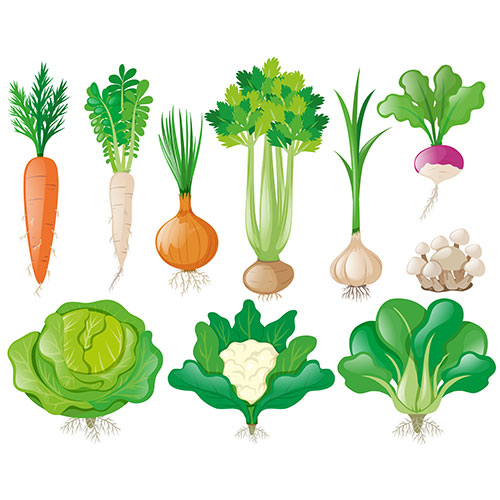 different types vegetables 1