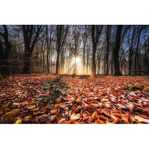 high angle shot red autumn leaves ground forest with trees back sunset 1