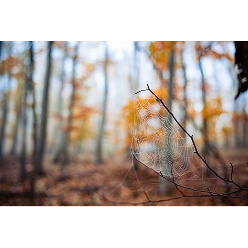selective focus shot spider web twig autumn forest 1