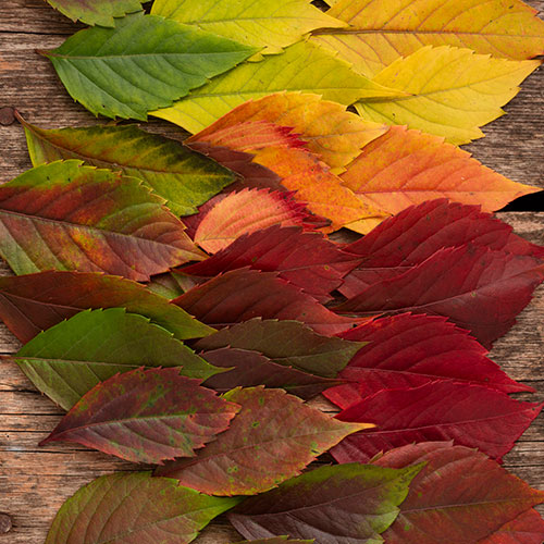 top view beautifully colored autumn leaves 1