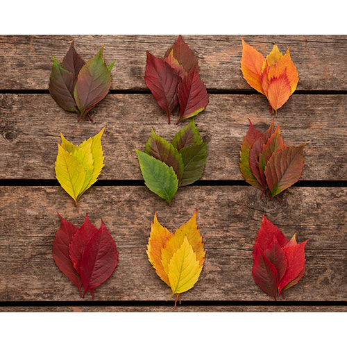 top view colorful autumn leaves wooden surface 1